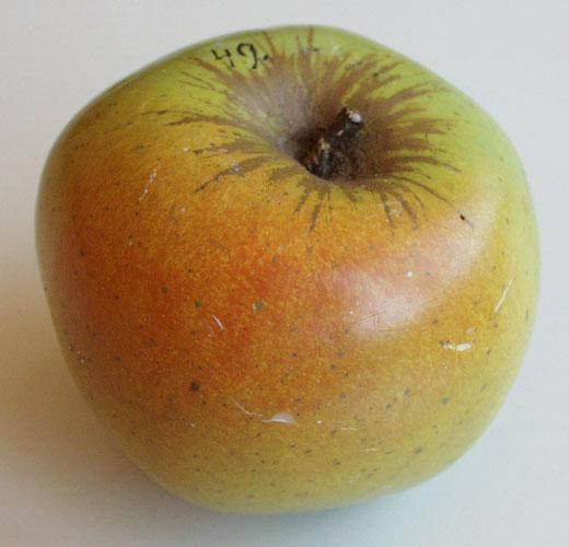 äpfel Gewachst