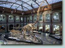Naturwissenschaftliches Museum Berlin